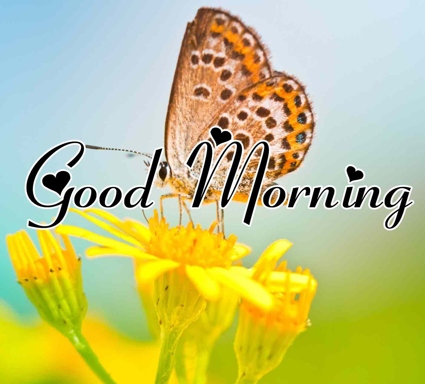 Free New morning Images HD 39