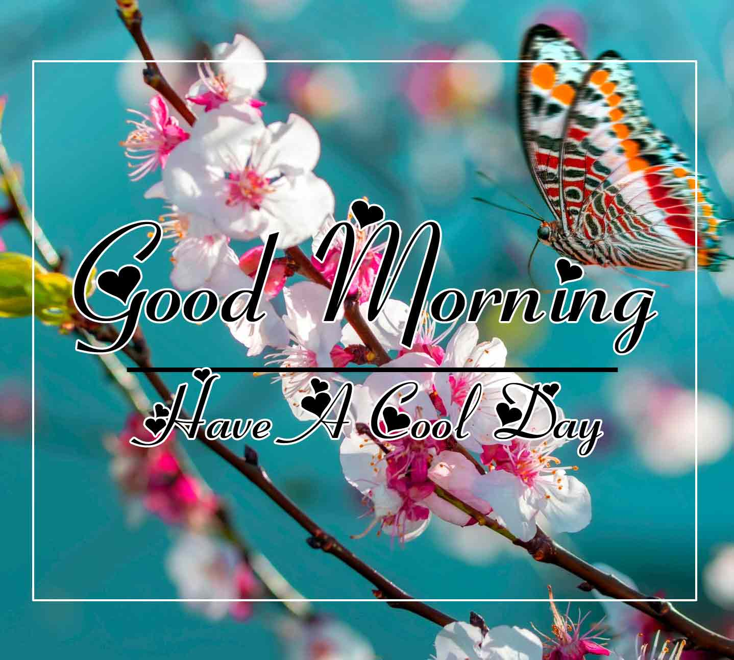 Free New morning Images HD 52