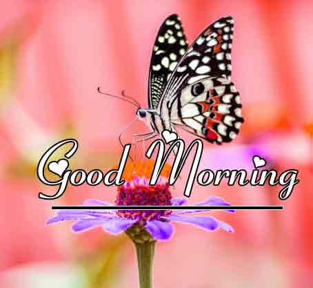 Free New morning Images HD 75