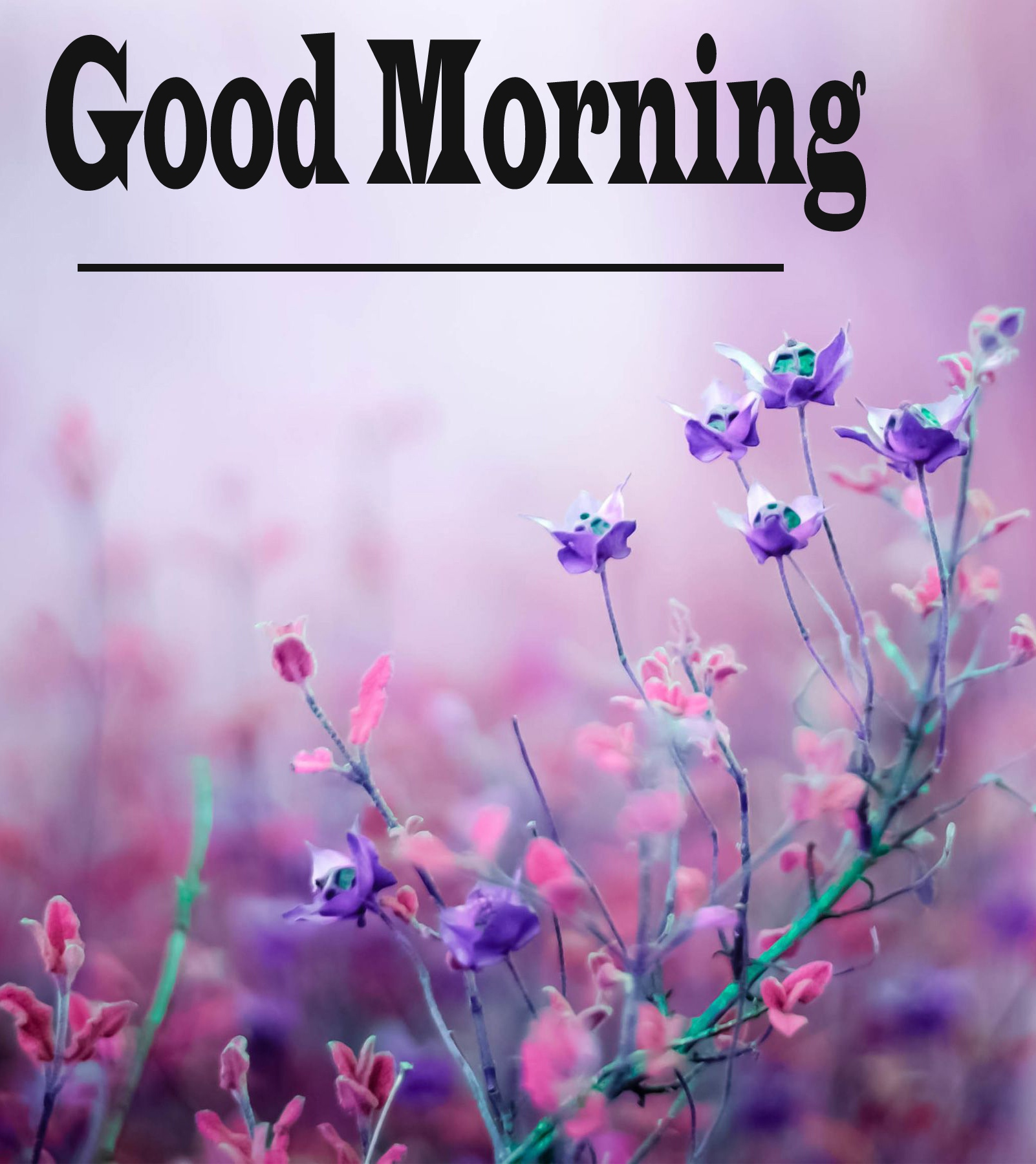 Free Very Good Morning Images 14