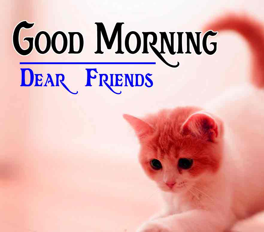 All Free Good Morning 4k HD Images HD Pic Download