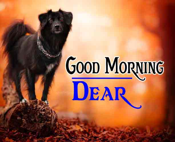 Good Morning 4k HD Images HD Wallpaper New Best Quality Download