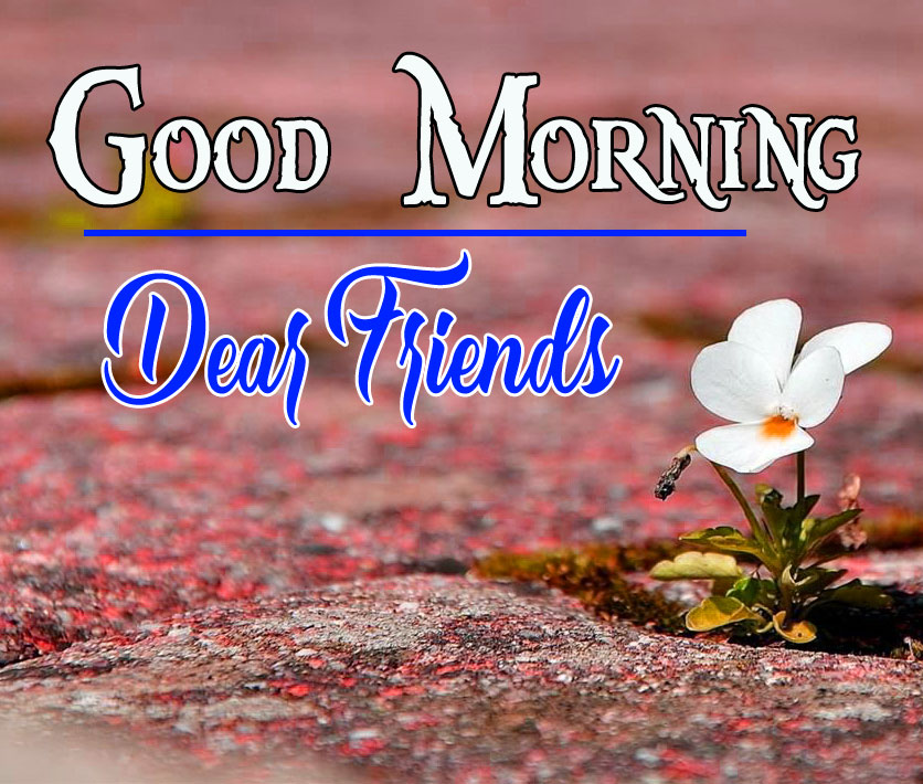 Good Morning Darling Images 16
