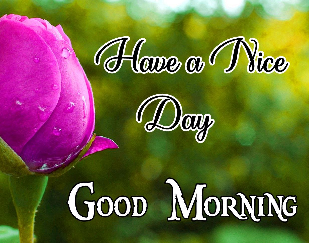 Good Morning Darling Images 4