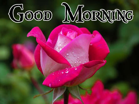 Good Morning Handsome Images 105