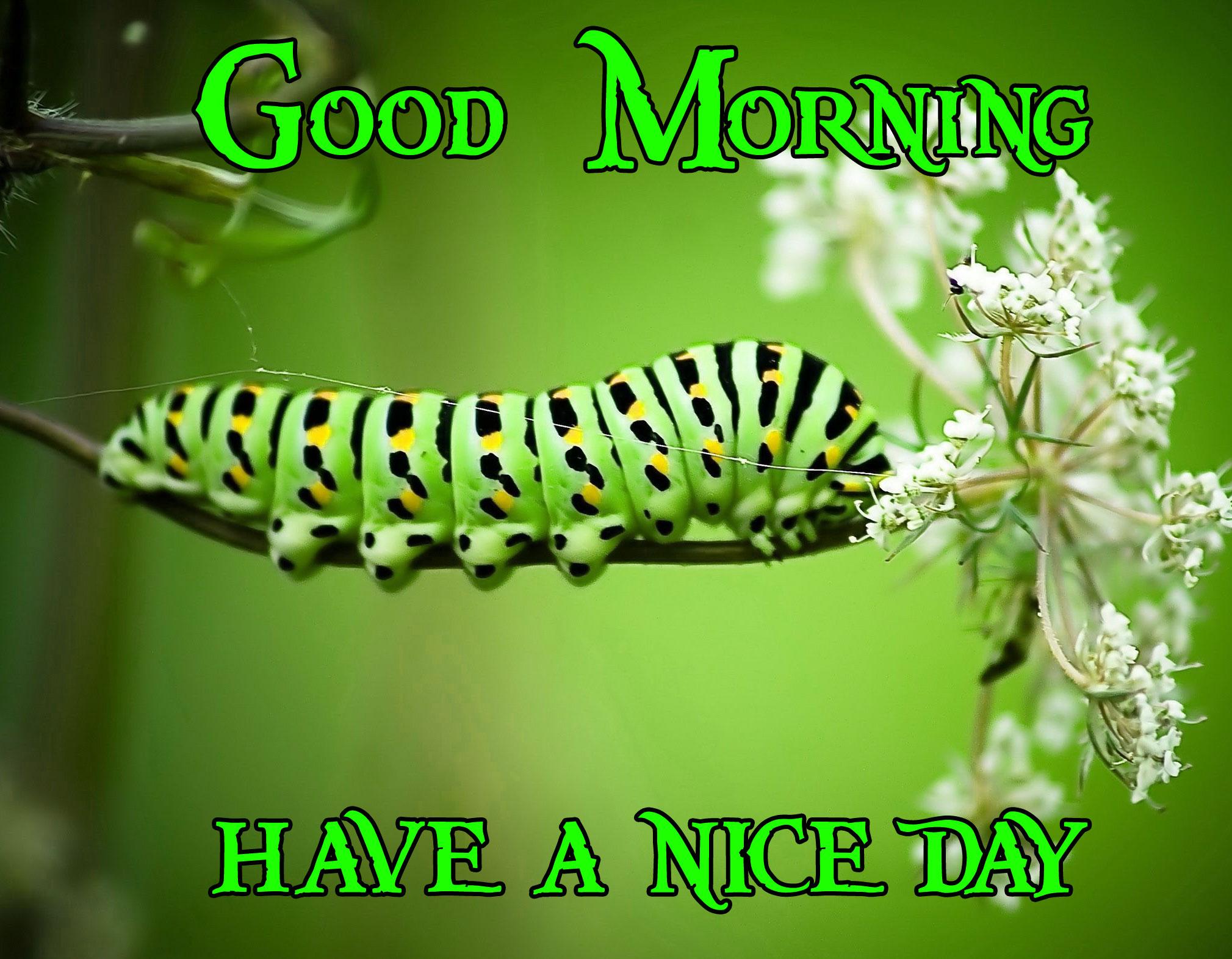 Good Morning Handsome Images 59