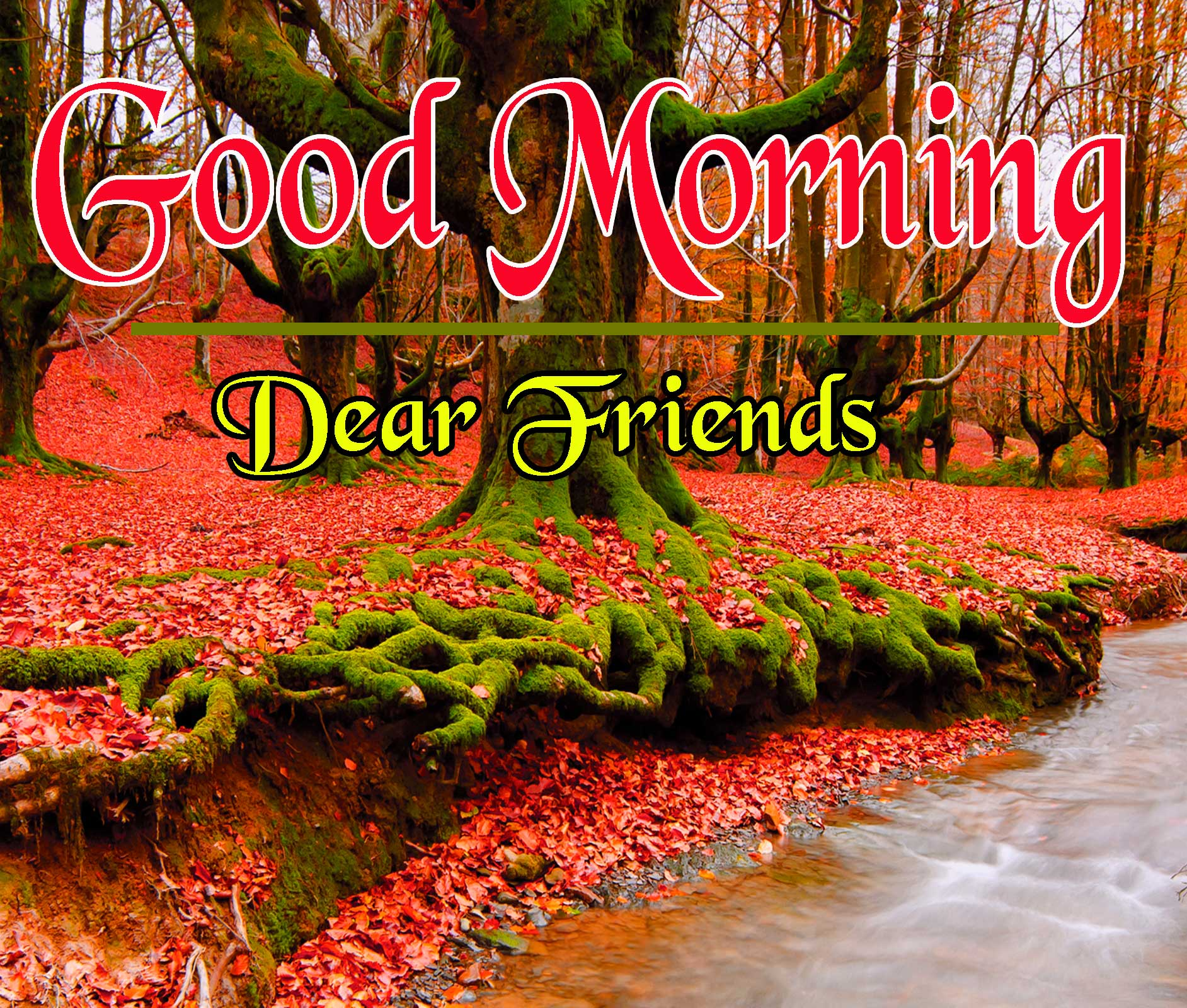 Beautiful HD Good Morning Wallpaper Pics
