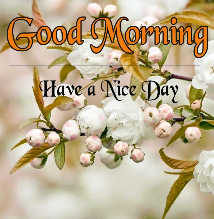 Good Morning Pictures Wallpaper Free Download