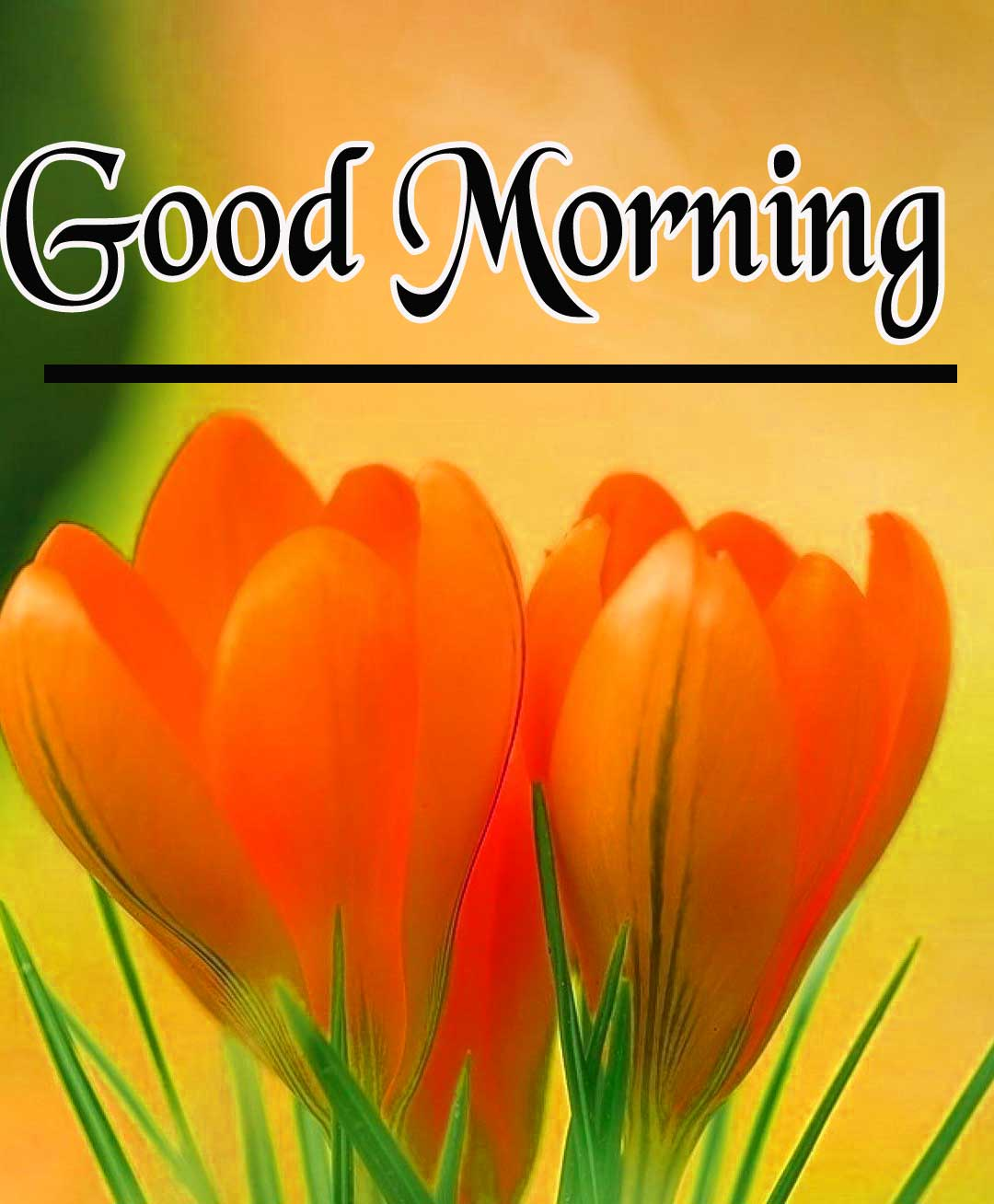 Good Morning Pictures Images HD