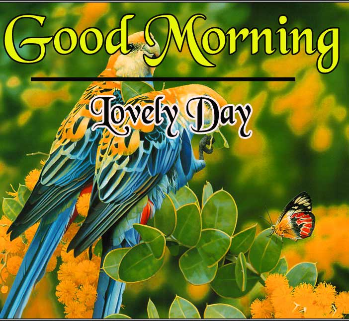 Bird Good Morning Images Download