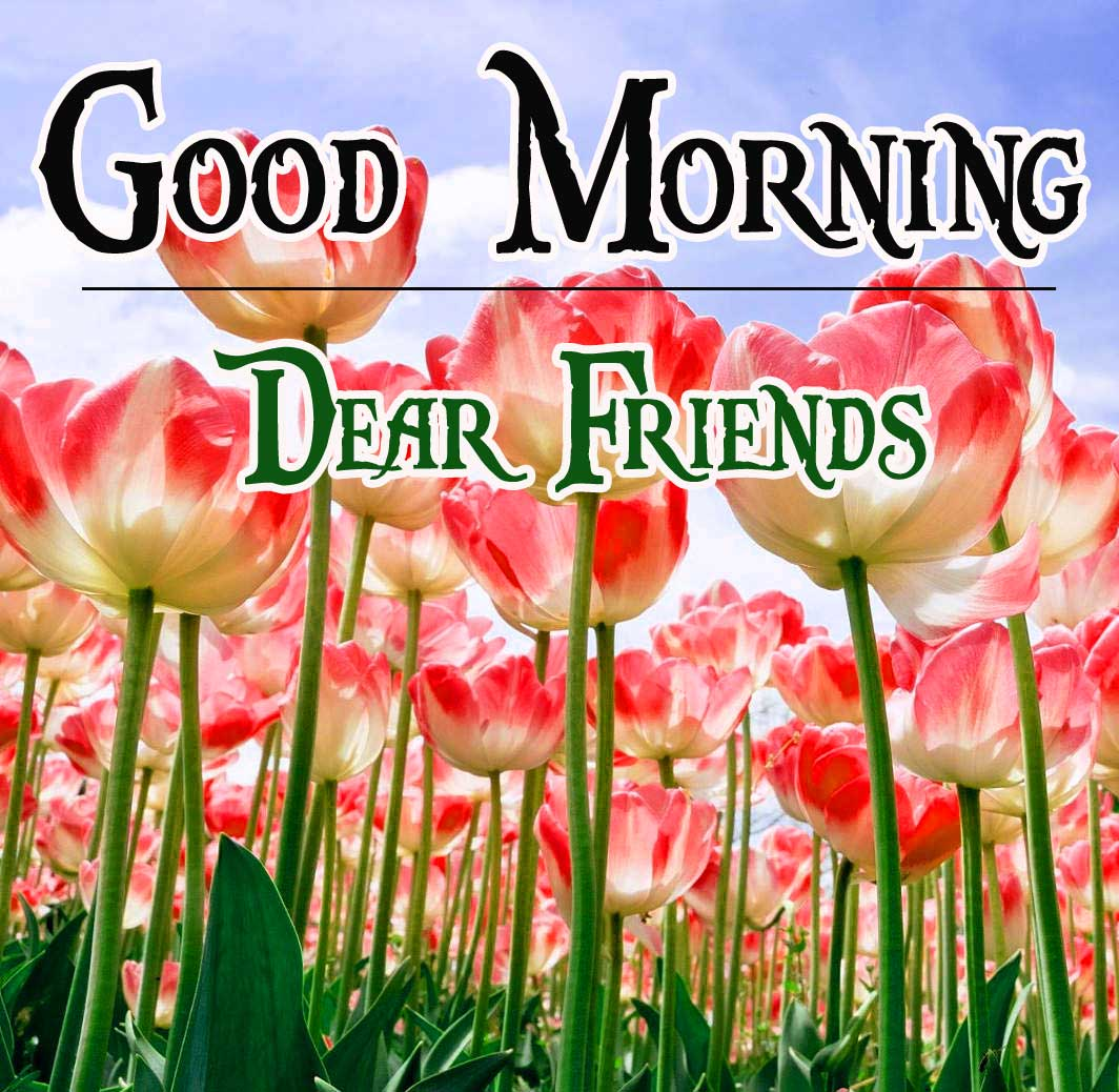 Flower Free Good Morning Pictures Images Download