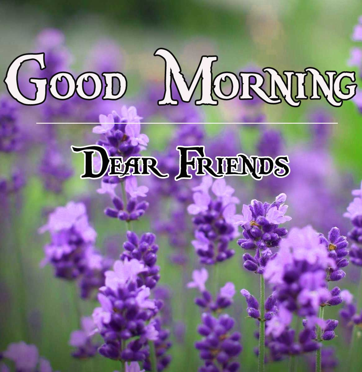 For Friend free Beautiful HD Good Morning Pics Download