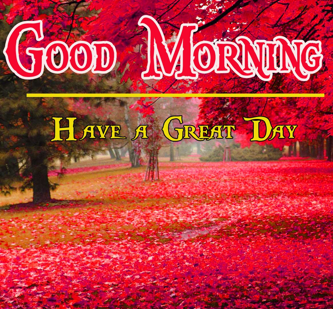 Latest Free Beautiful HD Good Morning Pics Download