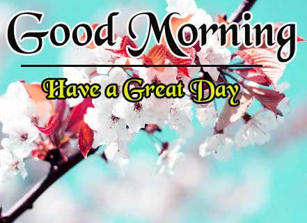 Beautiful HD Good Morning Wallpaper Download