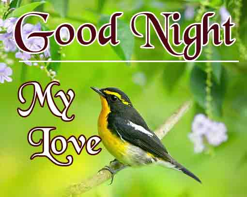 Good Night Pics Pictures Download