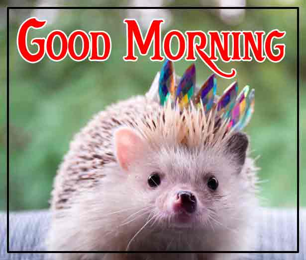 Pinterest Good Morning Images 42