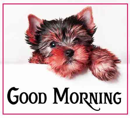 Pinterest Good Morning Images 64