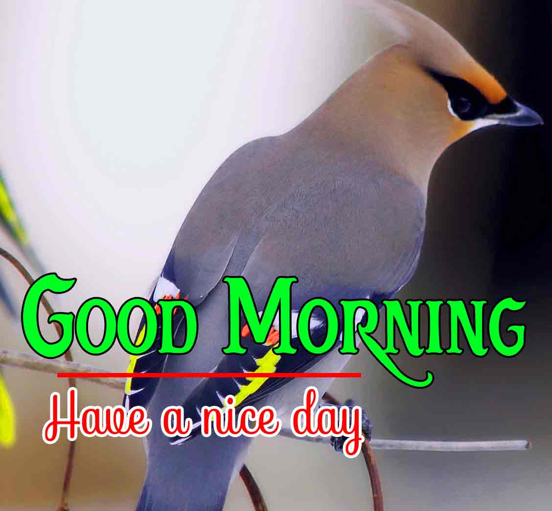 Pinterest Good Morning Images 7