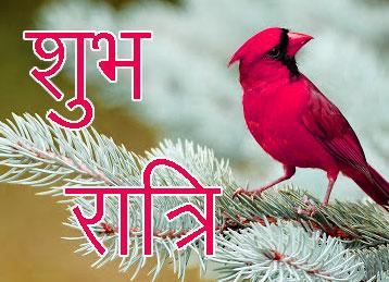 Shubh Ratri Wallpaper 75
