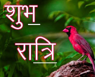 Shubh Ratri Wallpaper 78