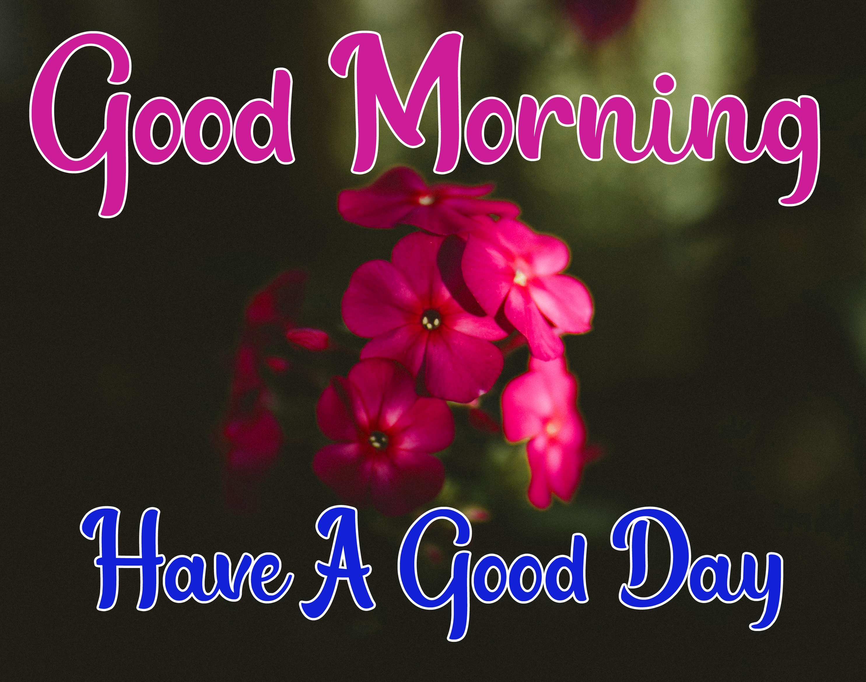 Special Good Morning Wallpaper 15