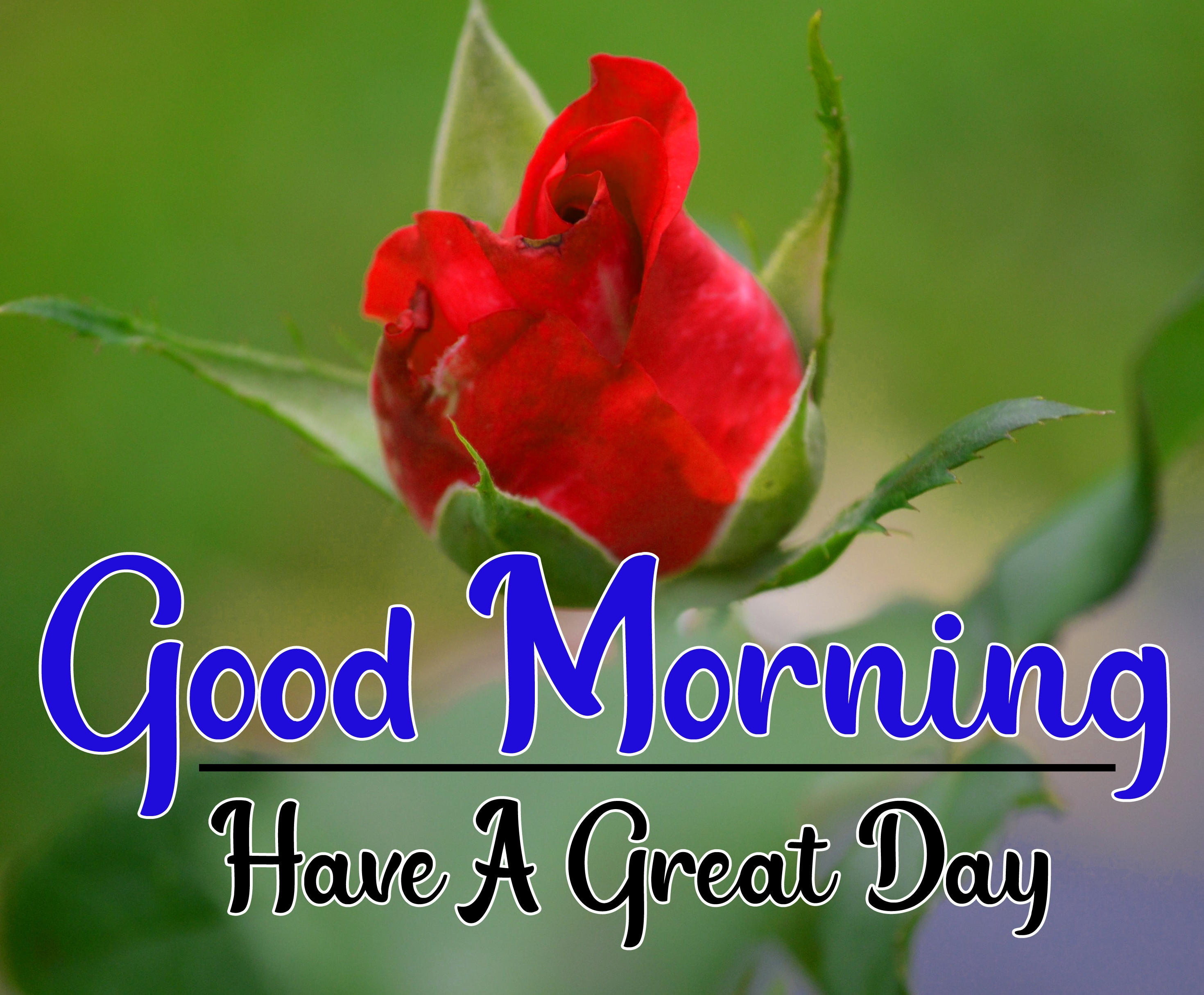 Special Good Morning Wallpaper 62