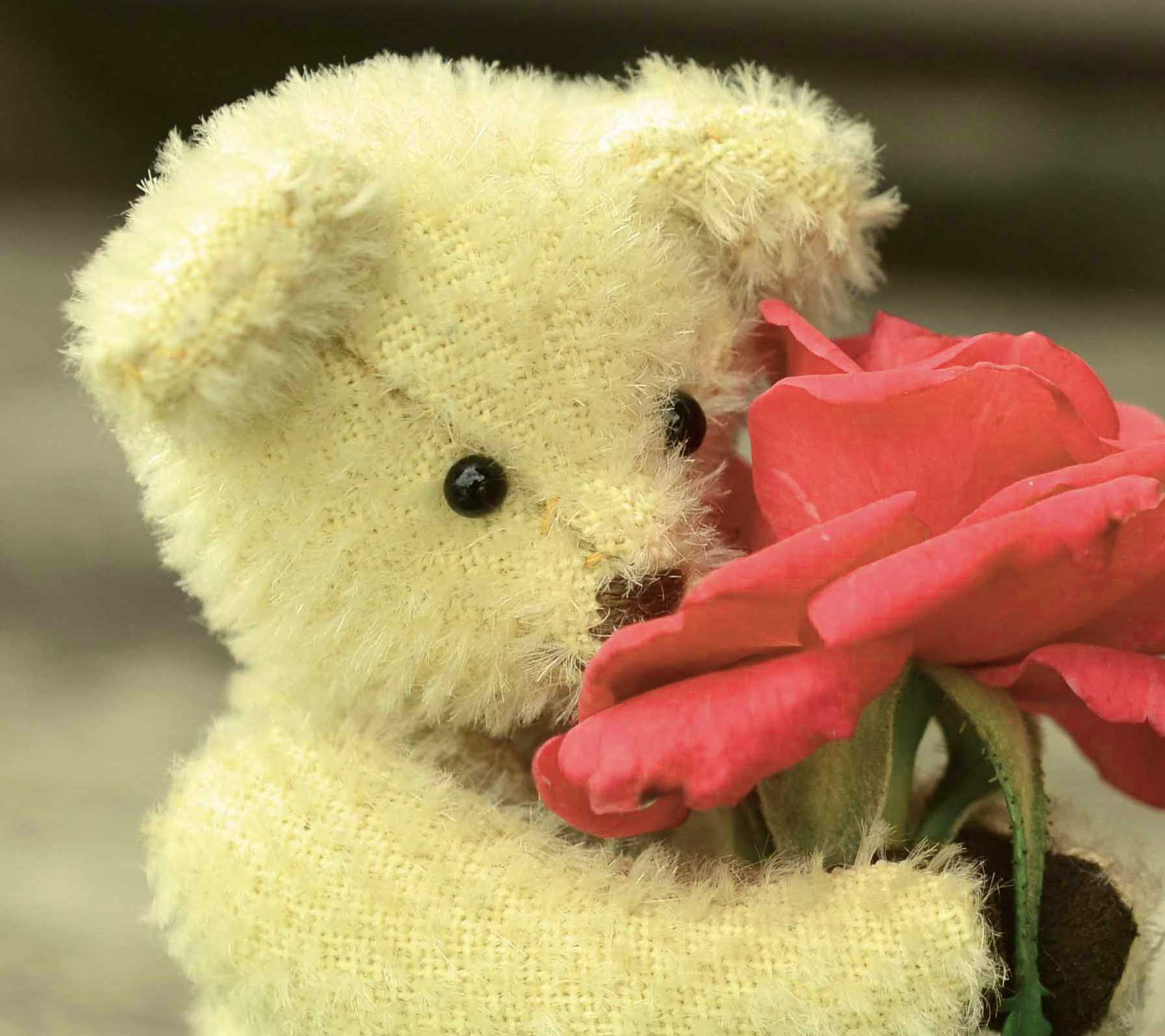 Best Teddy Bear Photo Pics Download Free