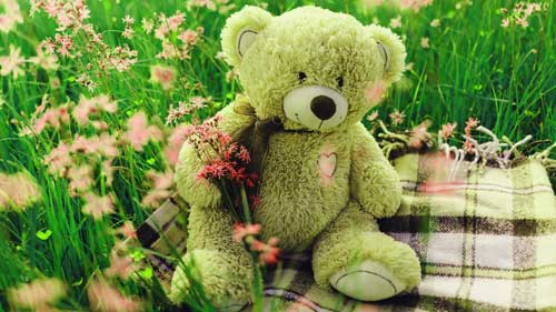Teddy Bear Photo Images for Whatsapp