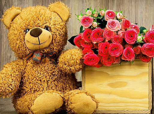 Teddy Bear Photo Wallpaper HD Download free