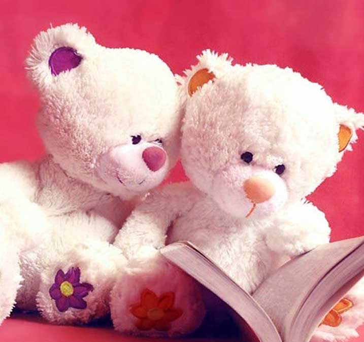 Teddy Bear Images Pics HD photo Download
