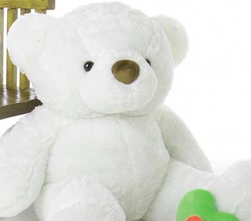 Latest Teddy Bear Images Pics HD Pics Download