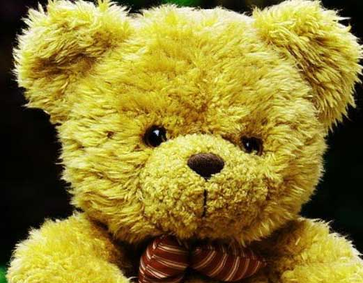 Free Latest Teddy Bear Photo Wallpaper Pics Download