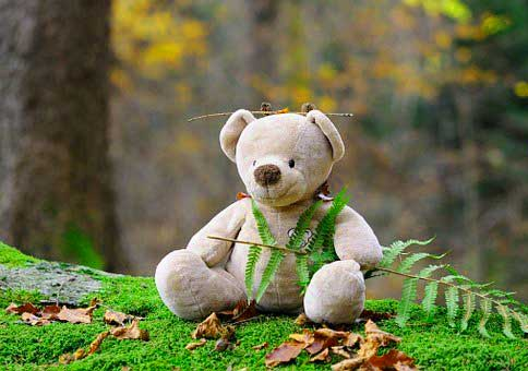 Teddy Bear Photo for facebook / Whatsapp