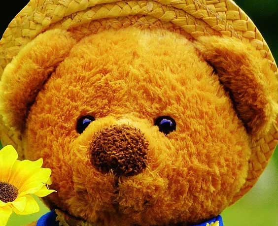 Teddy Bear Photo Wallpaper Download Free