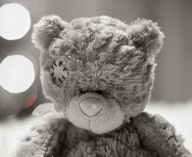 Teddy Bear Photo Wallpaper New Download