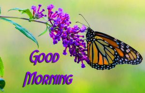 2021 butterfly good morning Images Pics Download