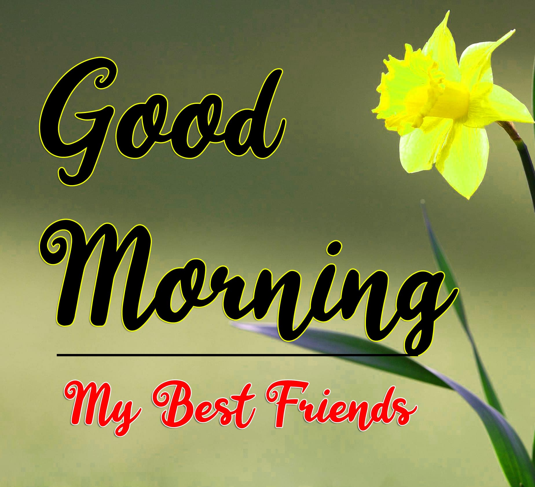 Beautiful Good Morning Pics Download 18