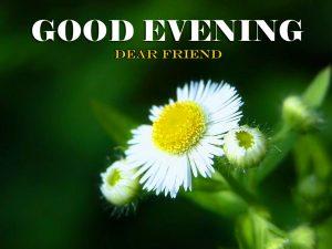 Best HD Good Evening Images Pics Download