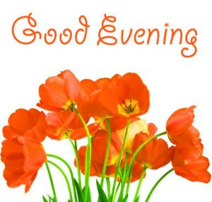 Best New Good Evening Images Pics for friend
