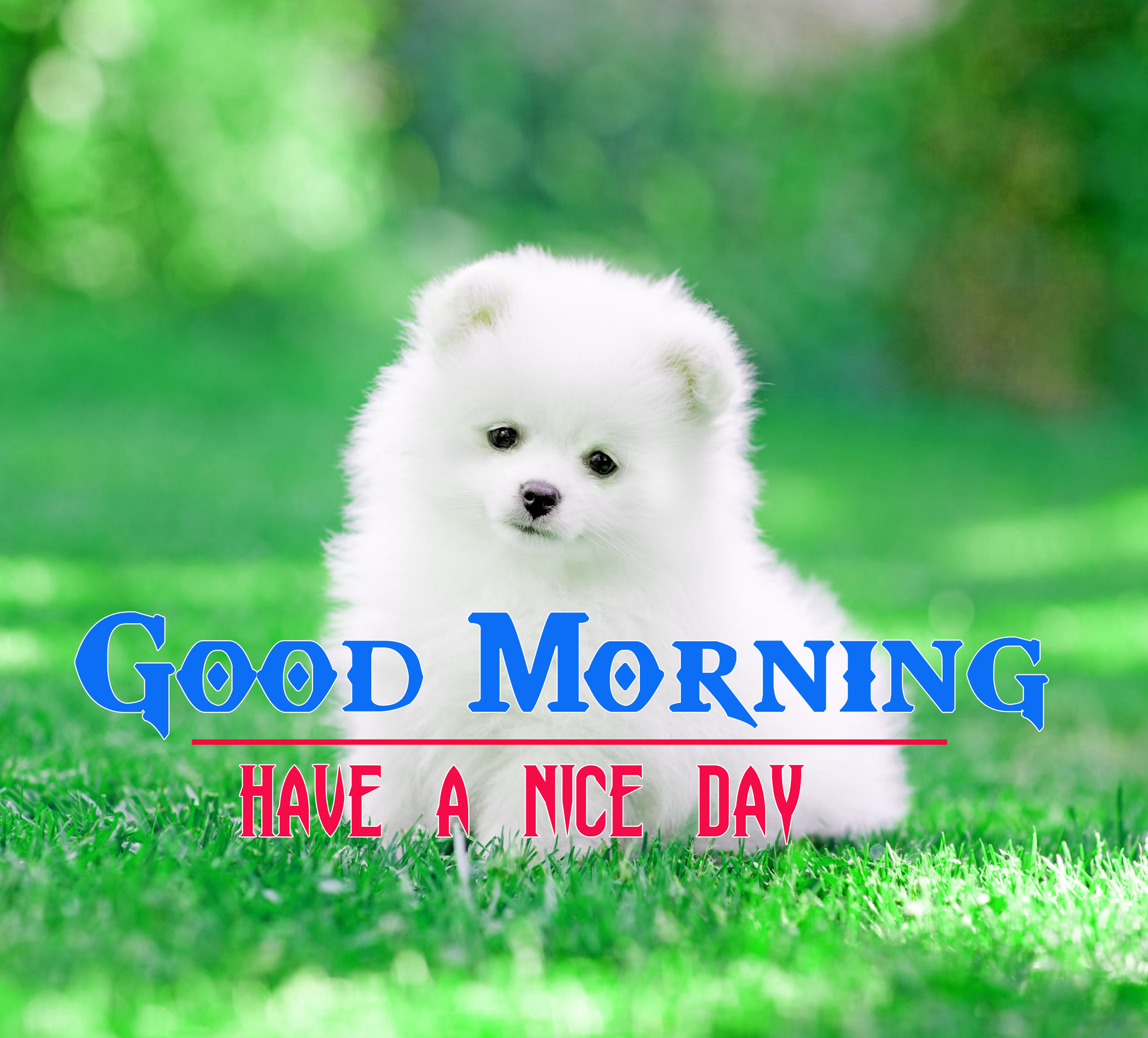 Cute Dog Puppy Good Morning Images 2