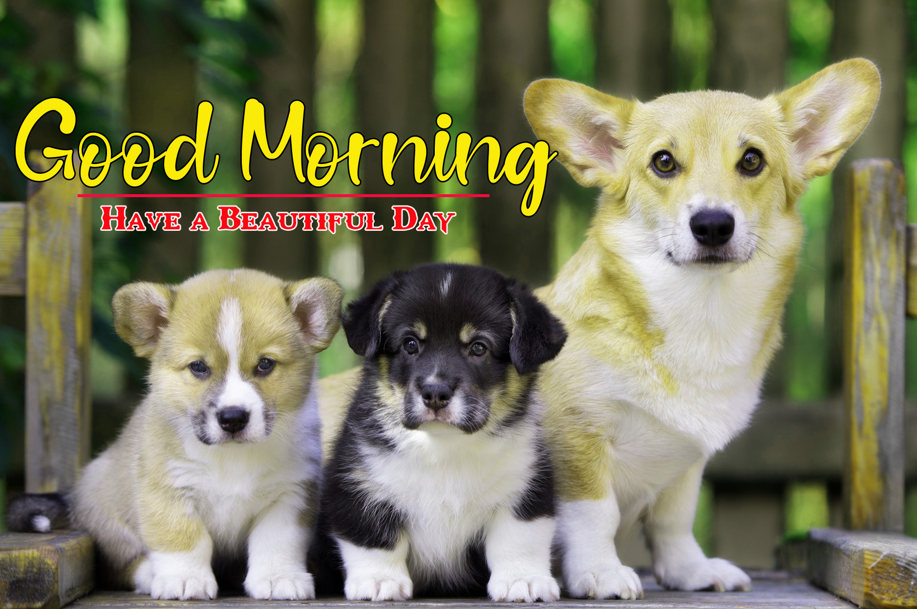 Cute Dog Puppy Good Morning Images 3