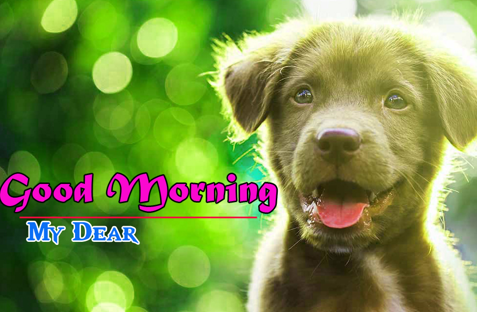 Cute Dog Puppy Good Morning Images 4