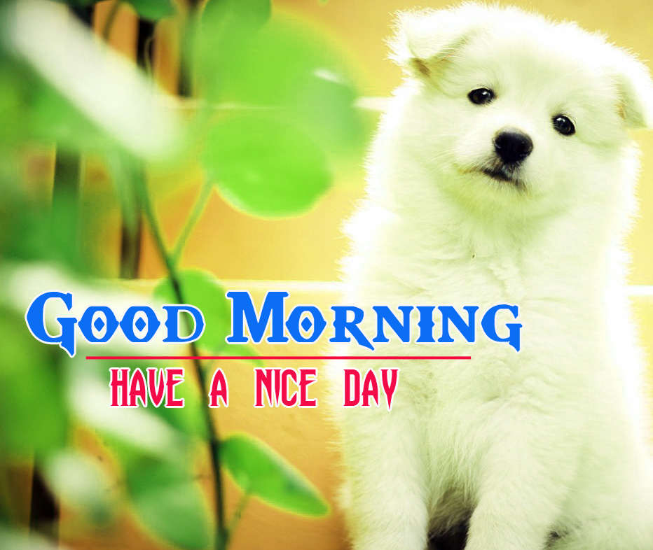 Cute Dog Puppy Good Morning Images 5