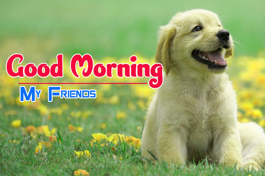 Cute Dog Puppy Good Morning Images 6