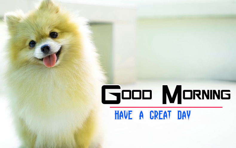 Cute Dog Puppy Good Morning Images 7