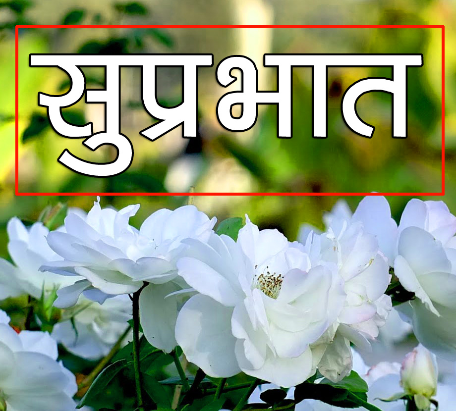 Flower Suprabhat Images 12