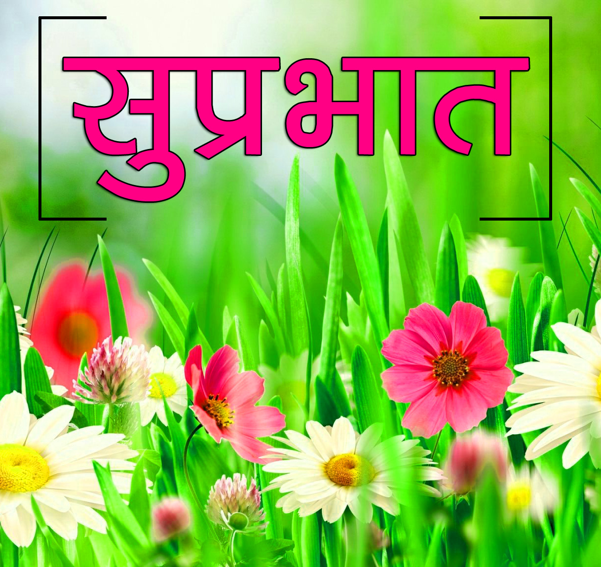 Flower Suprabhat Images 14