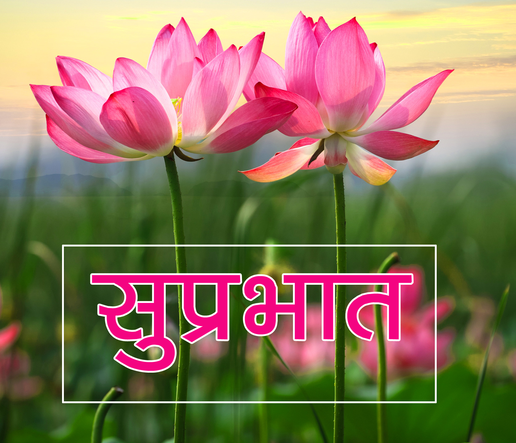 Flower Suprabhat Images 15