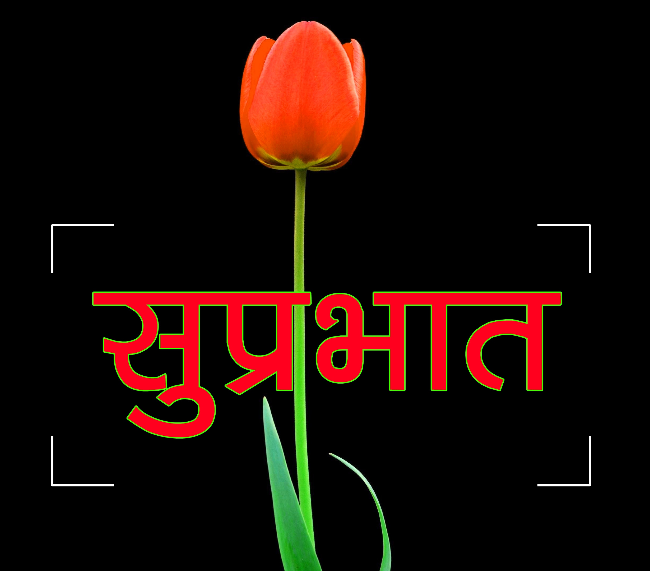 Flower Suprabhat Images 19