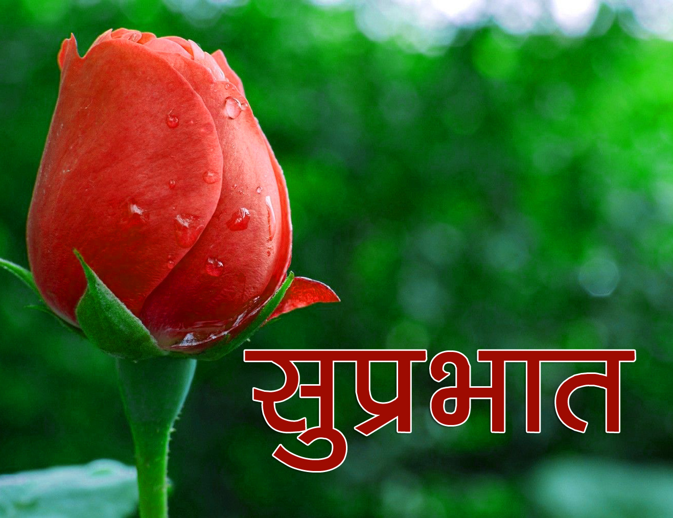Flower Suprabhat Images 2